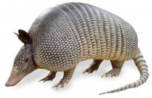 What?  I'm an aRmaDillo, you retard.